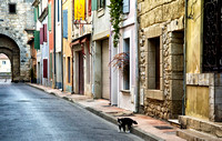 Street Cat, Aigues-Morte